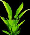 Mixy rostlin- Anubias, stříbrný štítek